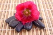 Blumenblüte